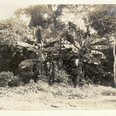 VAD2035-563.jpg