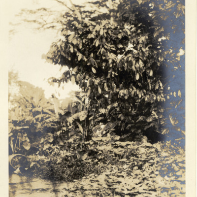 VAD2035-660.jpg